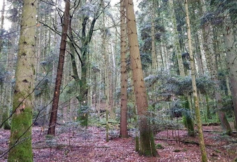 Forêt – France - 9