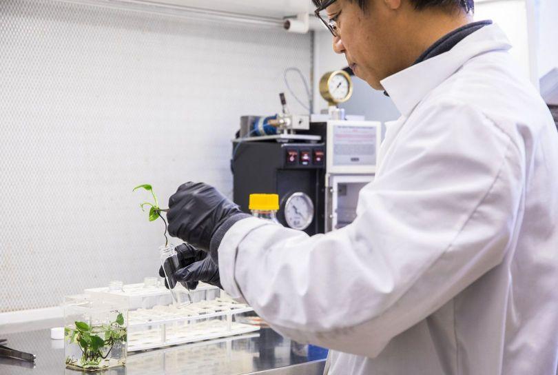 OGM – Plante – Gène de lapin - 1