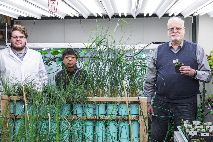 OGM – Plante – Gène de lapin - 2