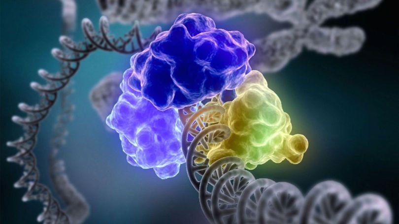 OGM – Plante – Gène de lapin - 4