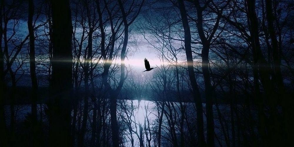 Oiseau - Paysage - Sinistre