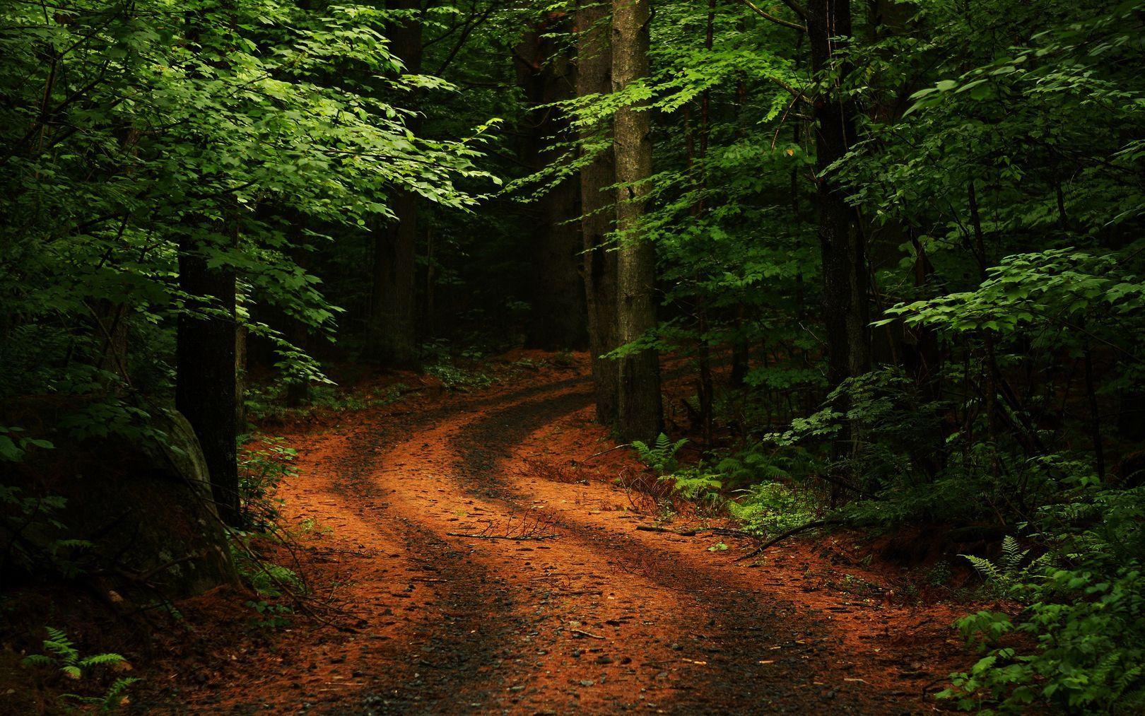Chemin - Bois