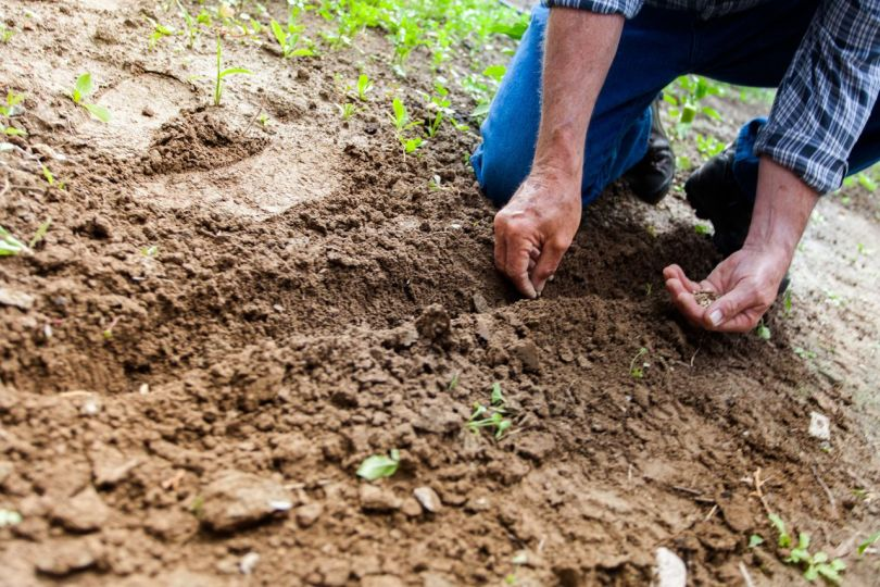paysan - plantation