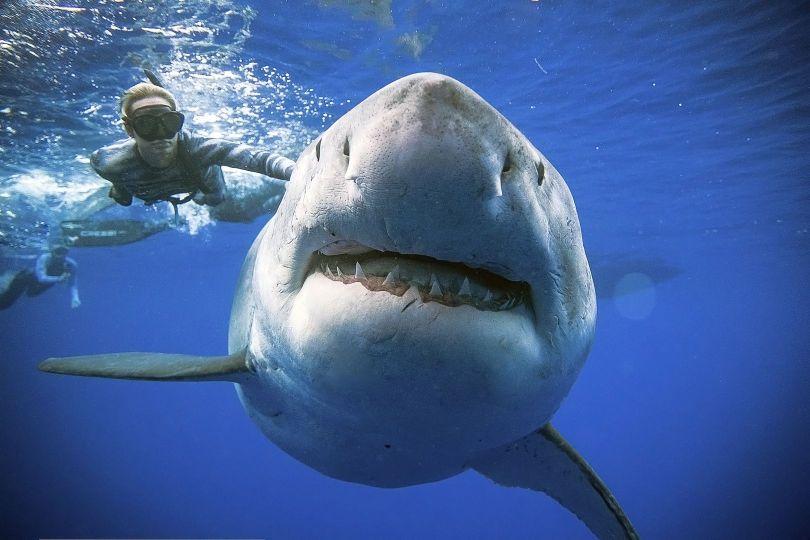 requin - 3