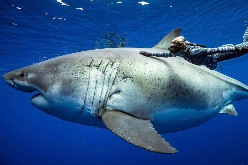 requin - 4