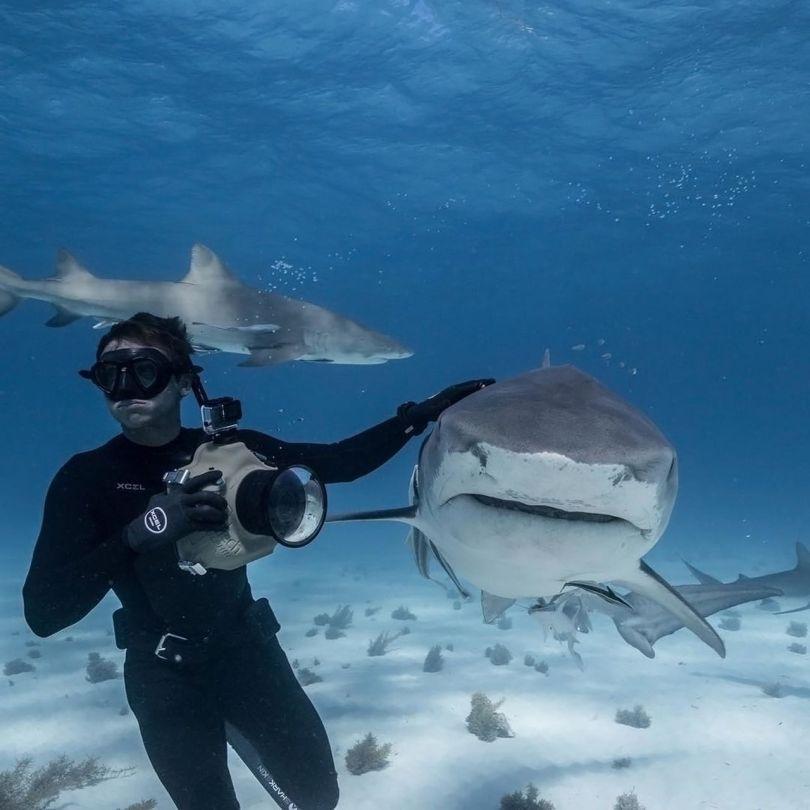 requin - 6