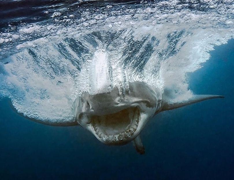 requin - 8