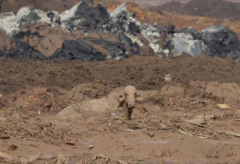 Brésil - Barrage minier – Brumadinho - 12