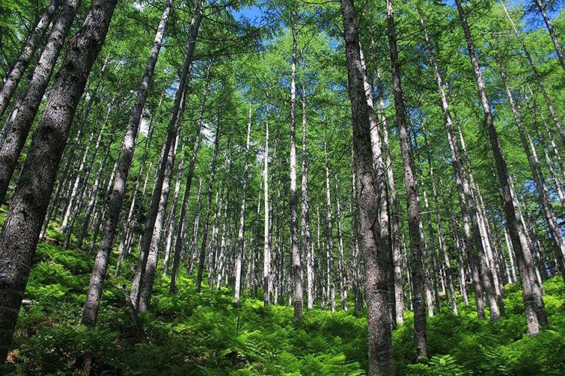 Forêt - 1