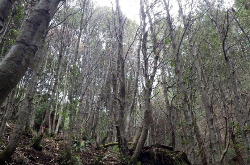 Forêt - 2