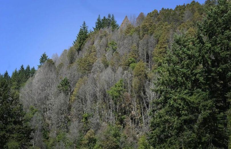 Forêt - 4