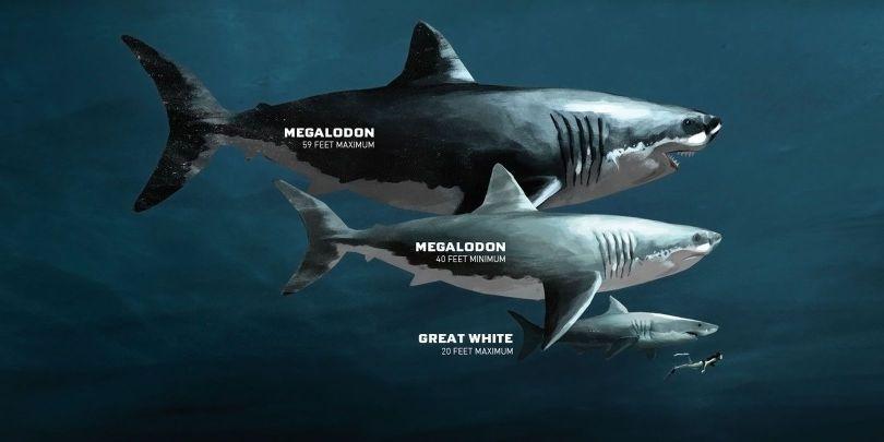 Mégalodon - 1