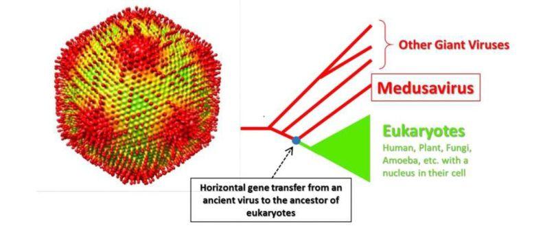 Virus géant