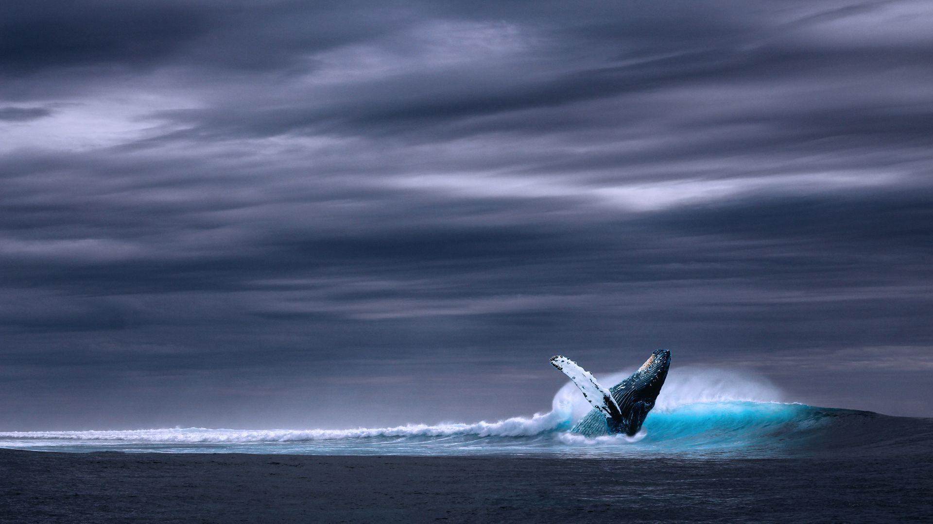 Baleine - 2
