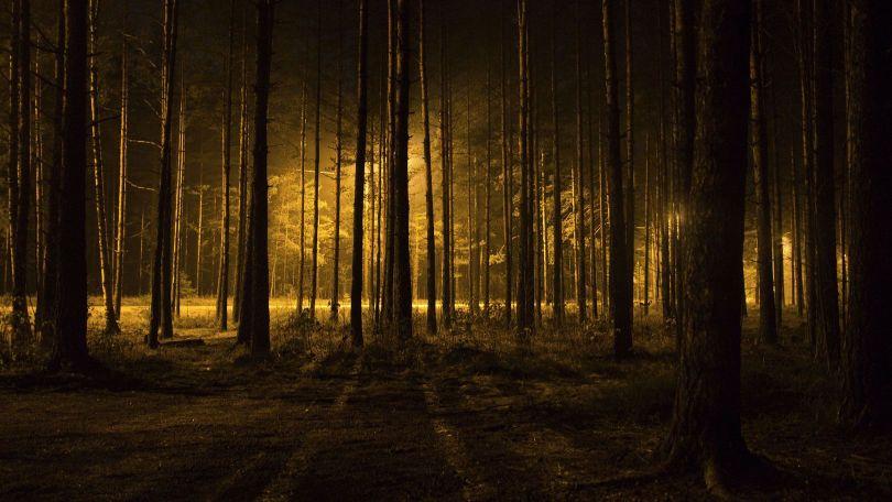 Forêt sinistre