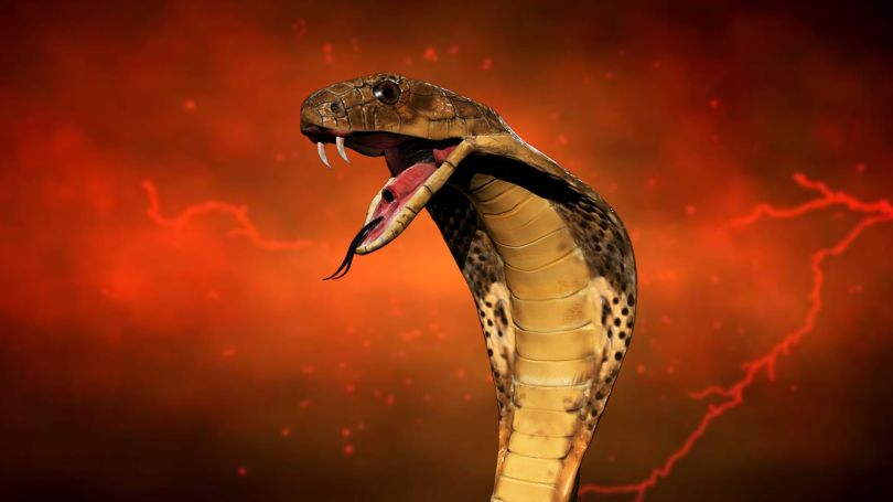 Serpent - 2