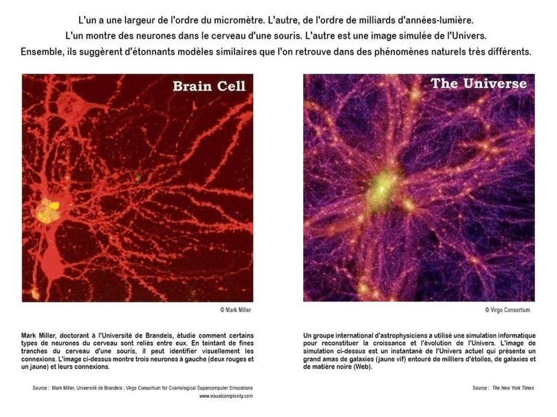 Comparatif - Cerveau - Univers
