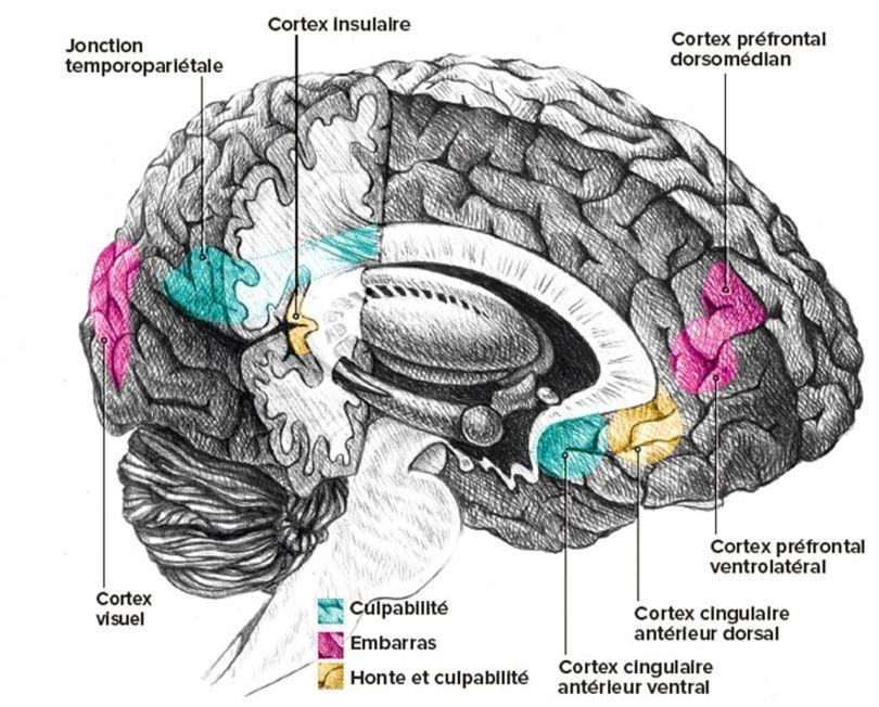 Cerveau - Culpabilité