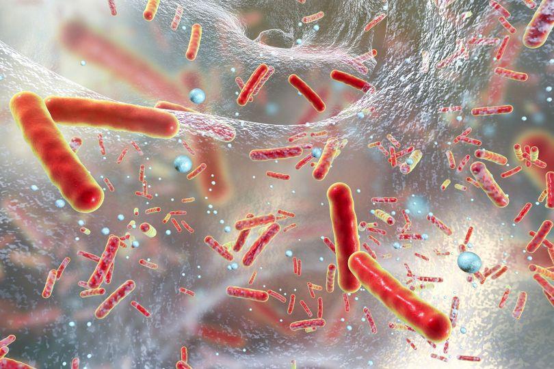 Bactéries- 2