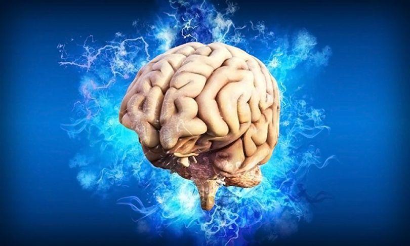 Cerveau - 1