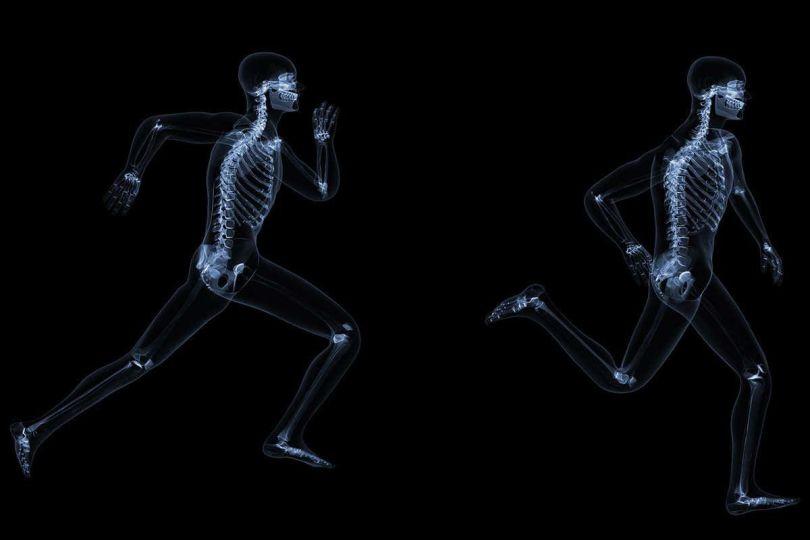 Squelette - 1