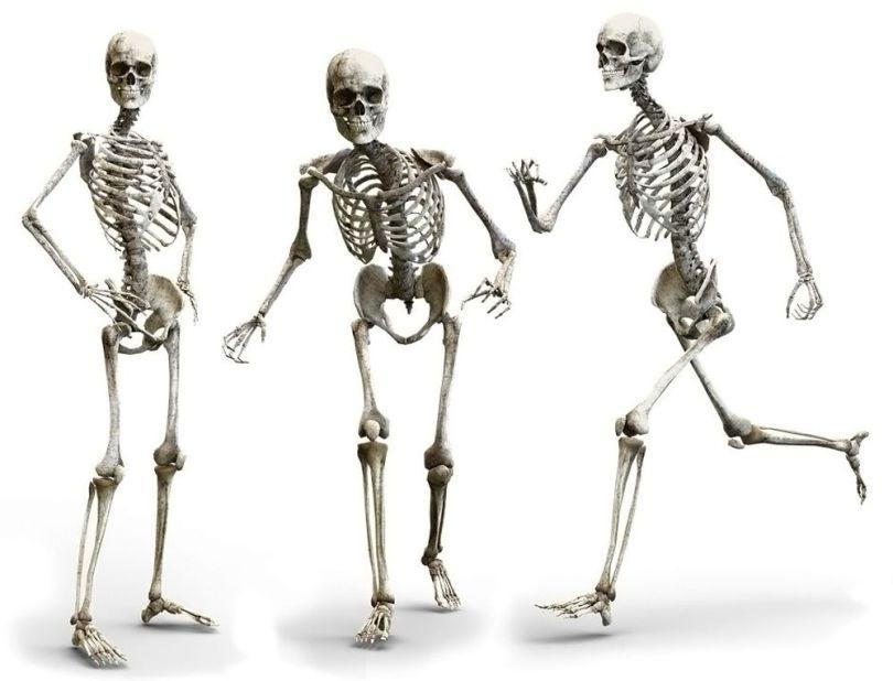 Squelette - 3