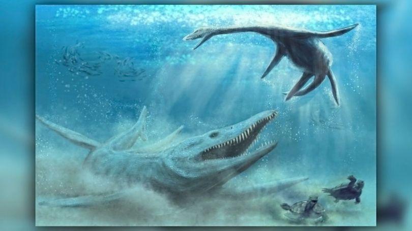 Pliosaure - 1