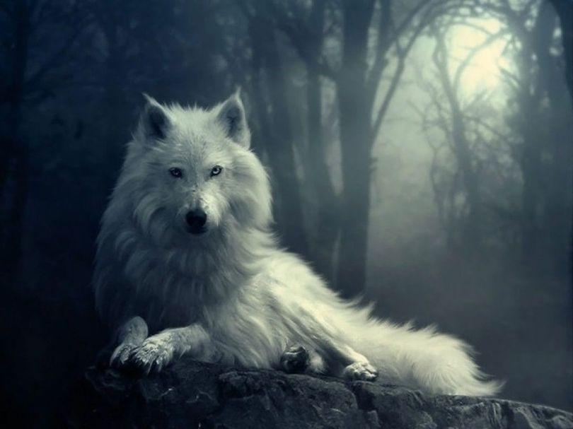Loup - 3