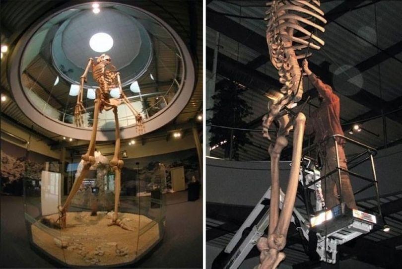 Squelette – Géant - 1