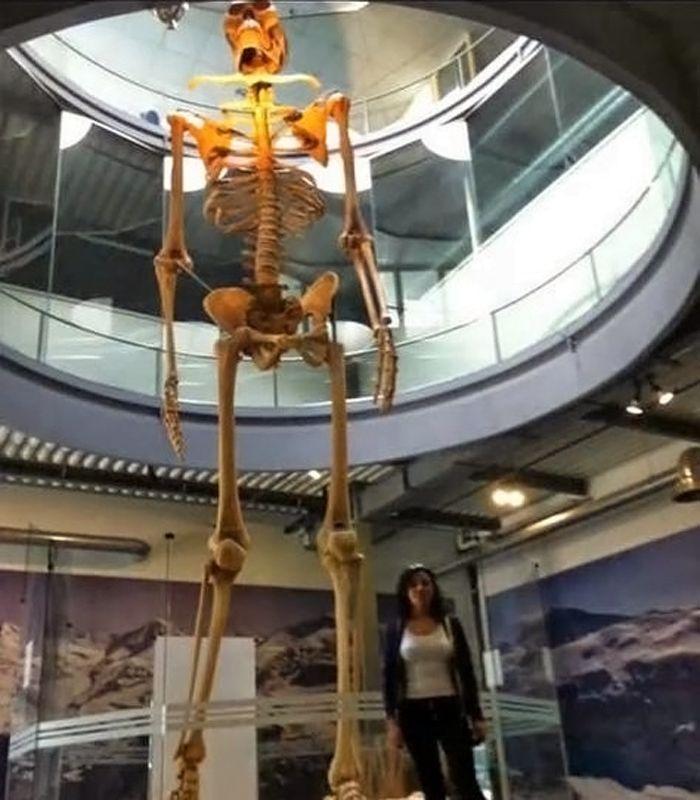 Squelette – Géant - 2