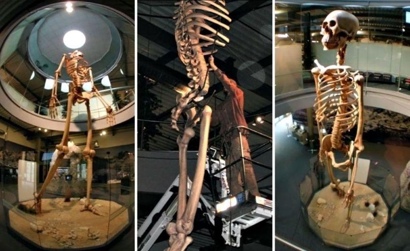 Squelette – Géant - 3