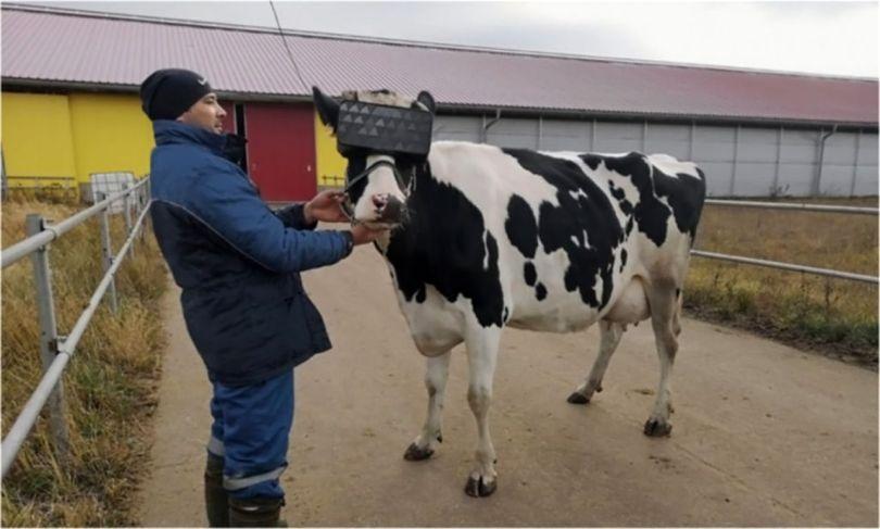 Vache - Casque VR - 2