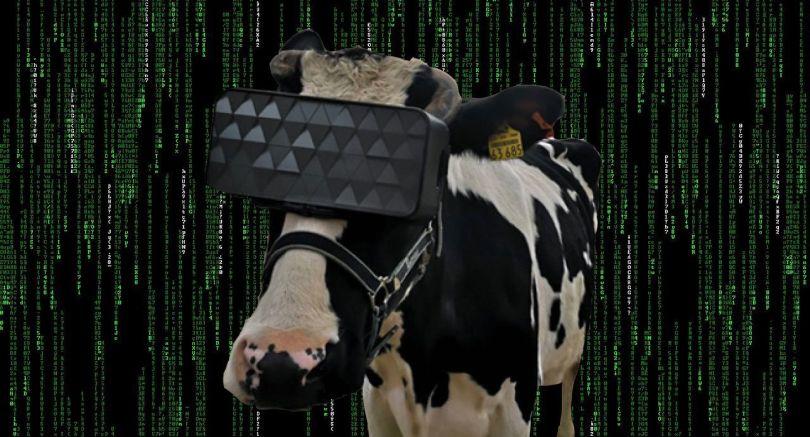 Vache - Casque VR - 3