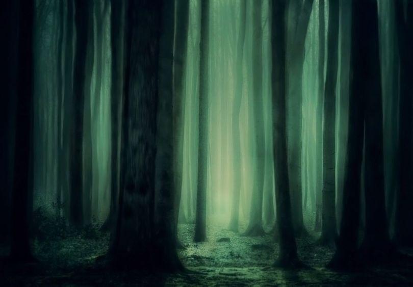 Forêt - Etrange - 1