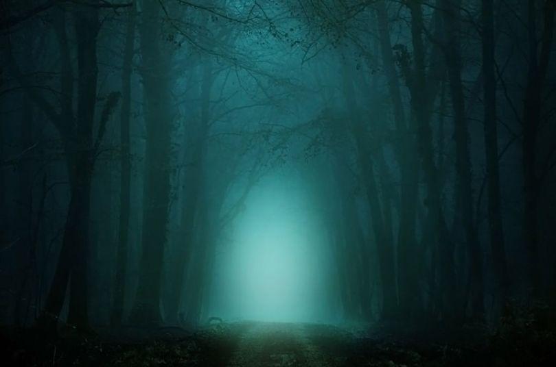 Forêt - Etrange - 2