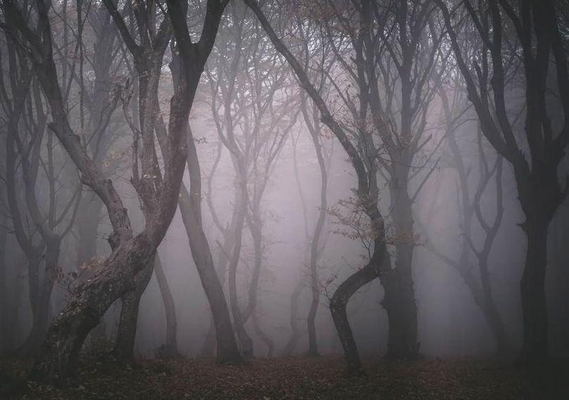 Forêt - Etrange - 3