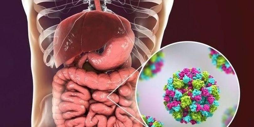 Intestins - 1