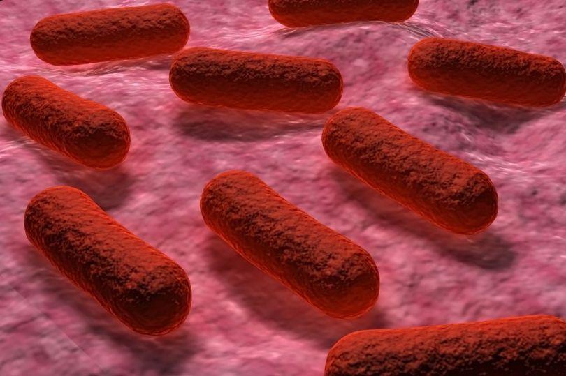 Bactéries - 1