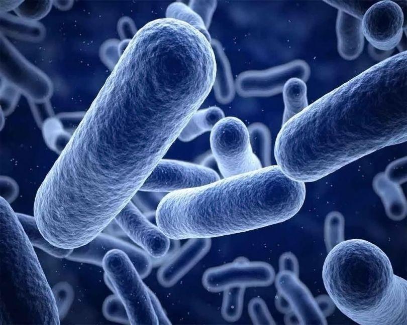 Bactéries - 2