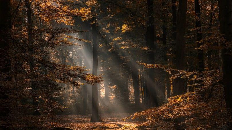 Forêt - 3