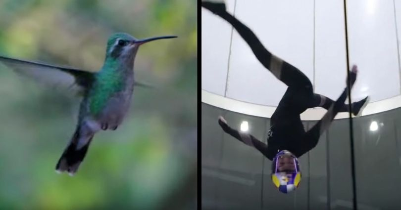 Colibris - Skydance