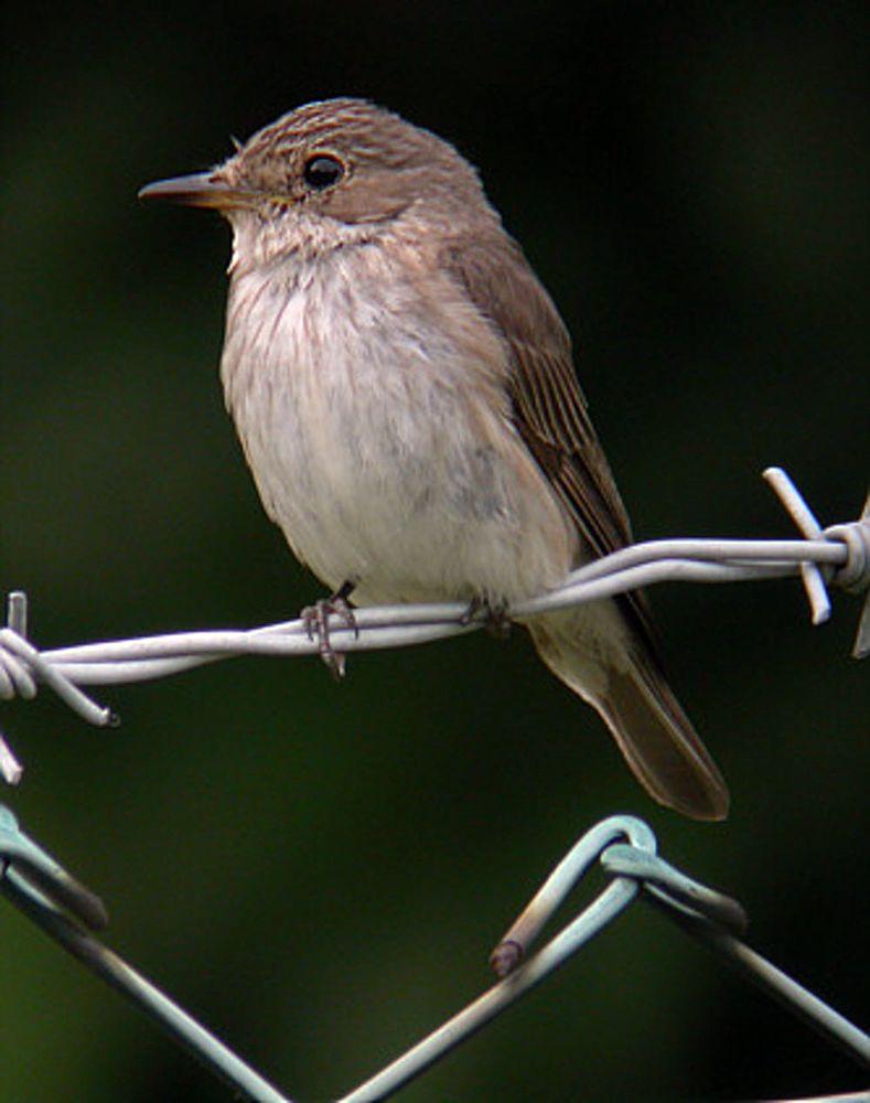 Oiseaux - 7