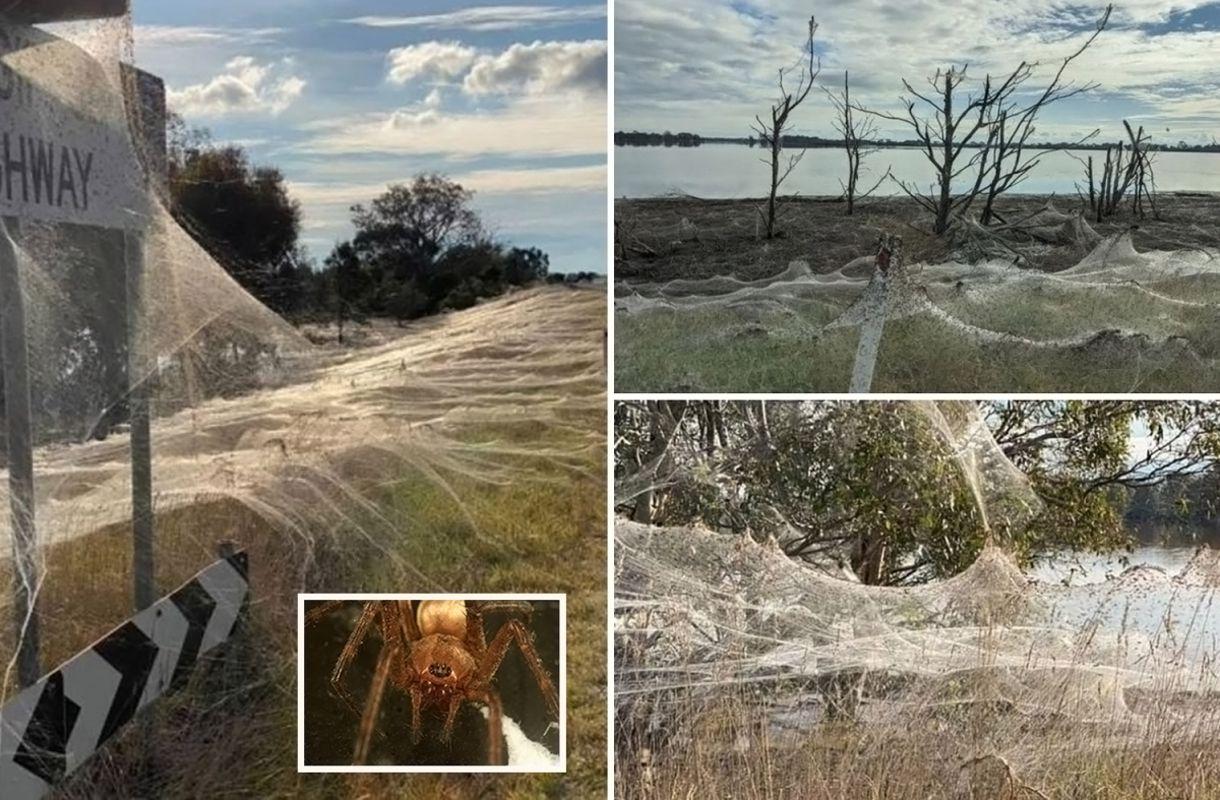 Araignées – Australie - 1