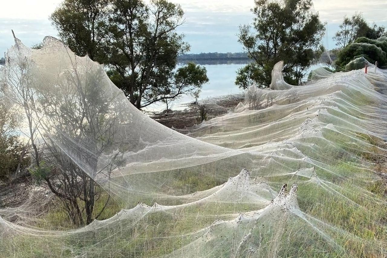 Araignées – Australie - 3