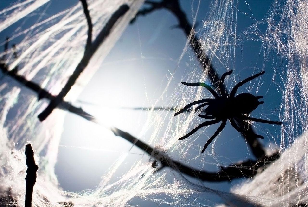 Araignées – Australie - 4